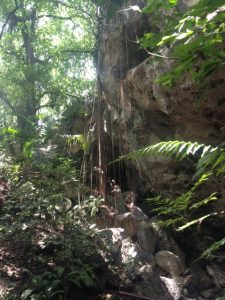 tiny travel chick punta cana jungle