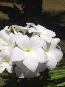 tiny travel chick punta cana white flower