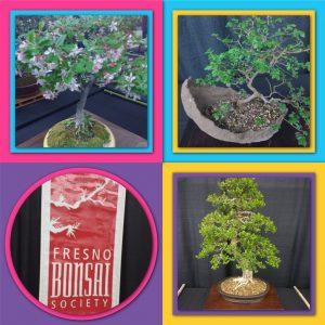 tiny travel chick bonsai society