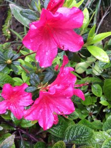 tiny travel chick san rafael tiny house flower garden