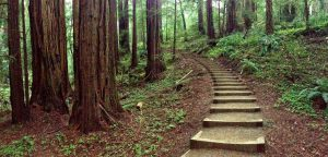 tiny travel experience most memorable travel experience muir woods hiking trail