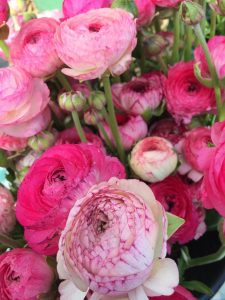 tiny travel chick most memorable travel experience flowers