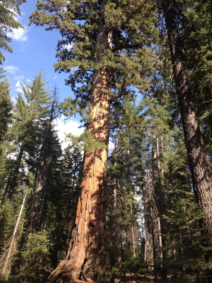 tiny travel chick places to hike in california sequoia national park
