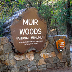 tiny travel most memorable travel experience muir woods national monument