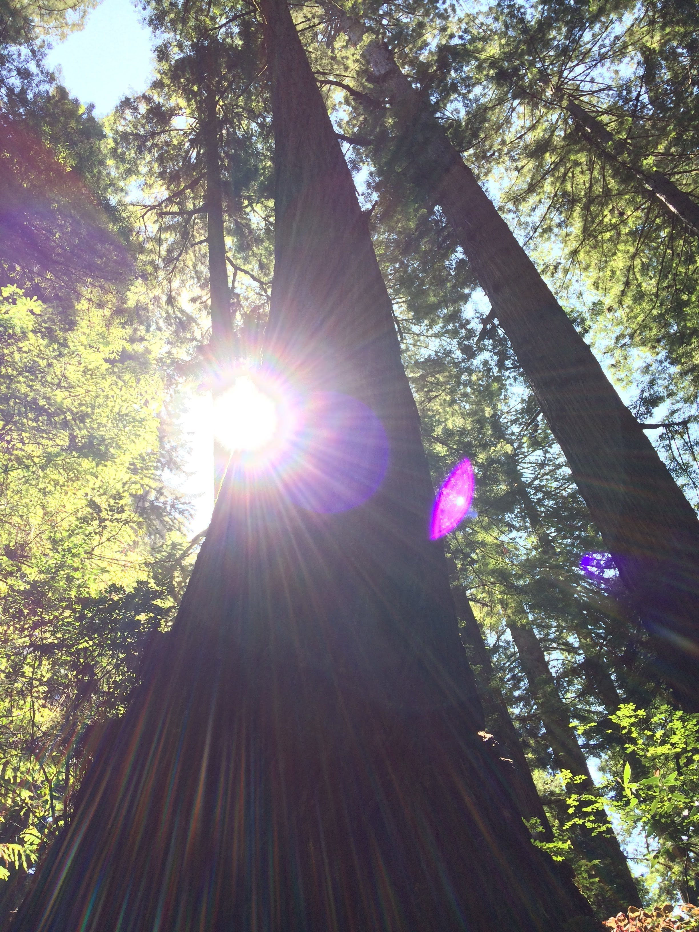 tiny travel chick incredible travel redwood national forest majestic trees