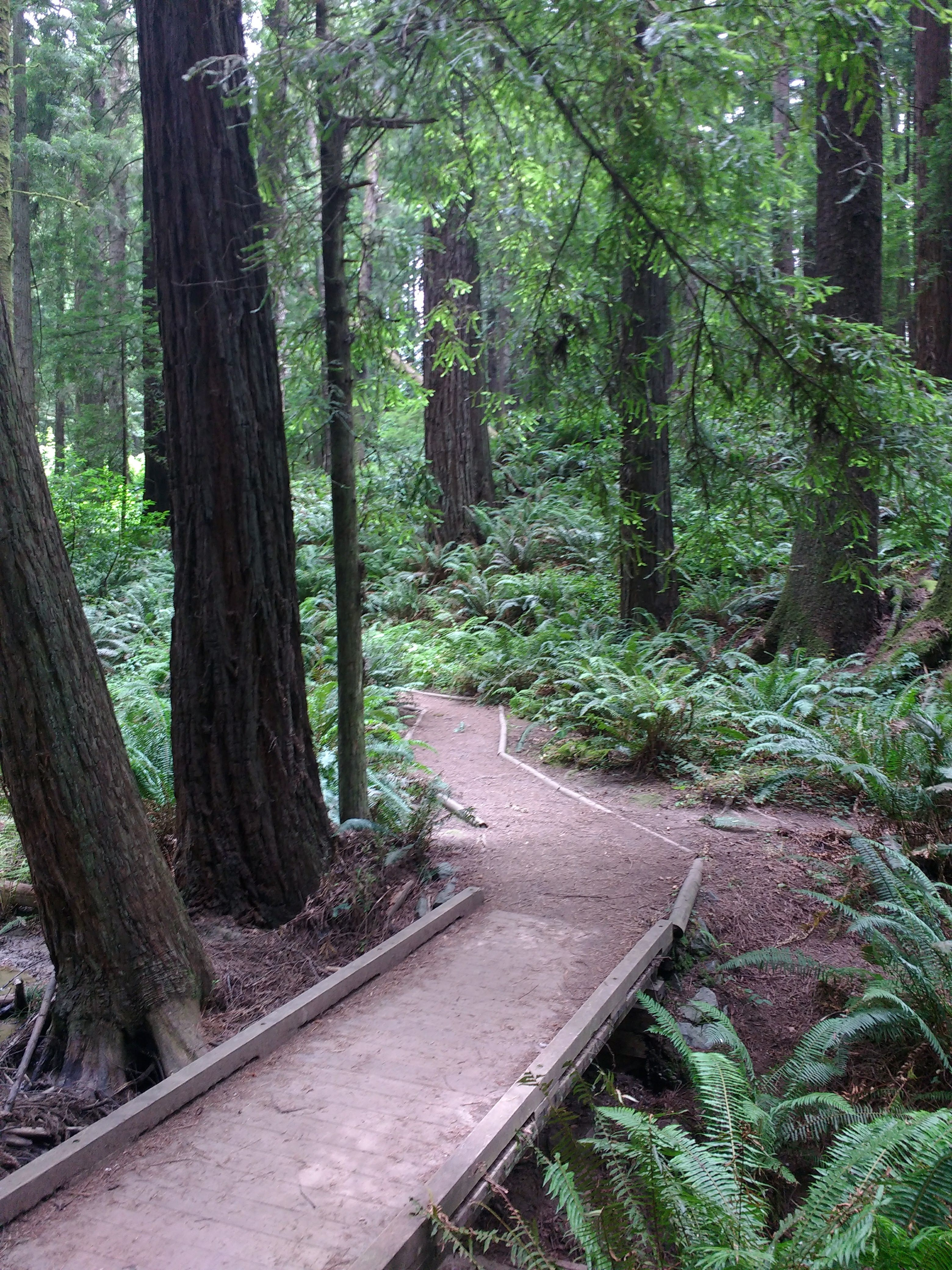 tiny travel chick places to hike in california arcata park