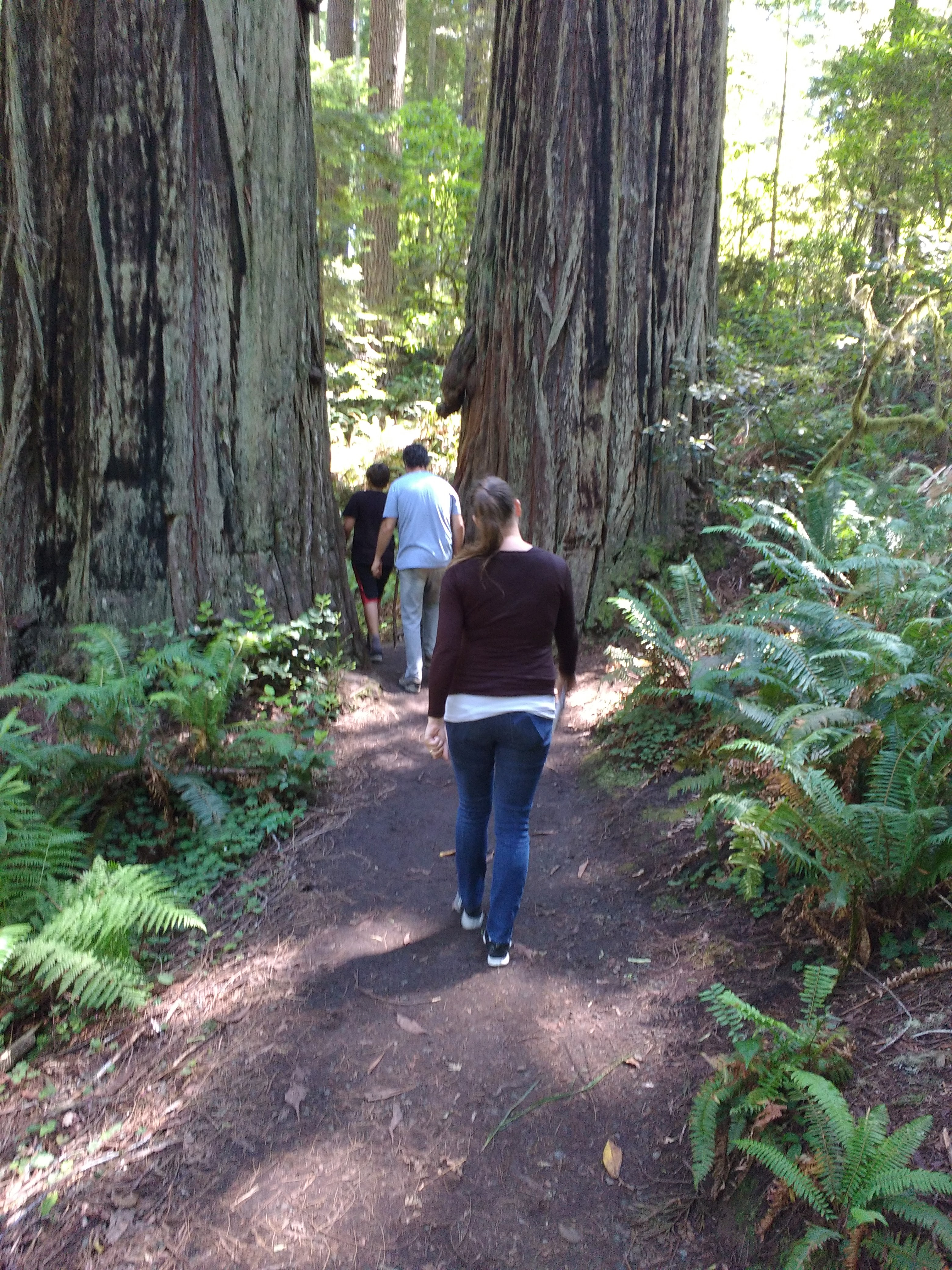 tiny travel chick incredible travel redwood national forest lady bird johnson grove trail family friendly