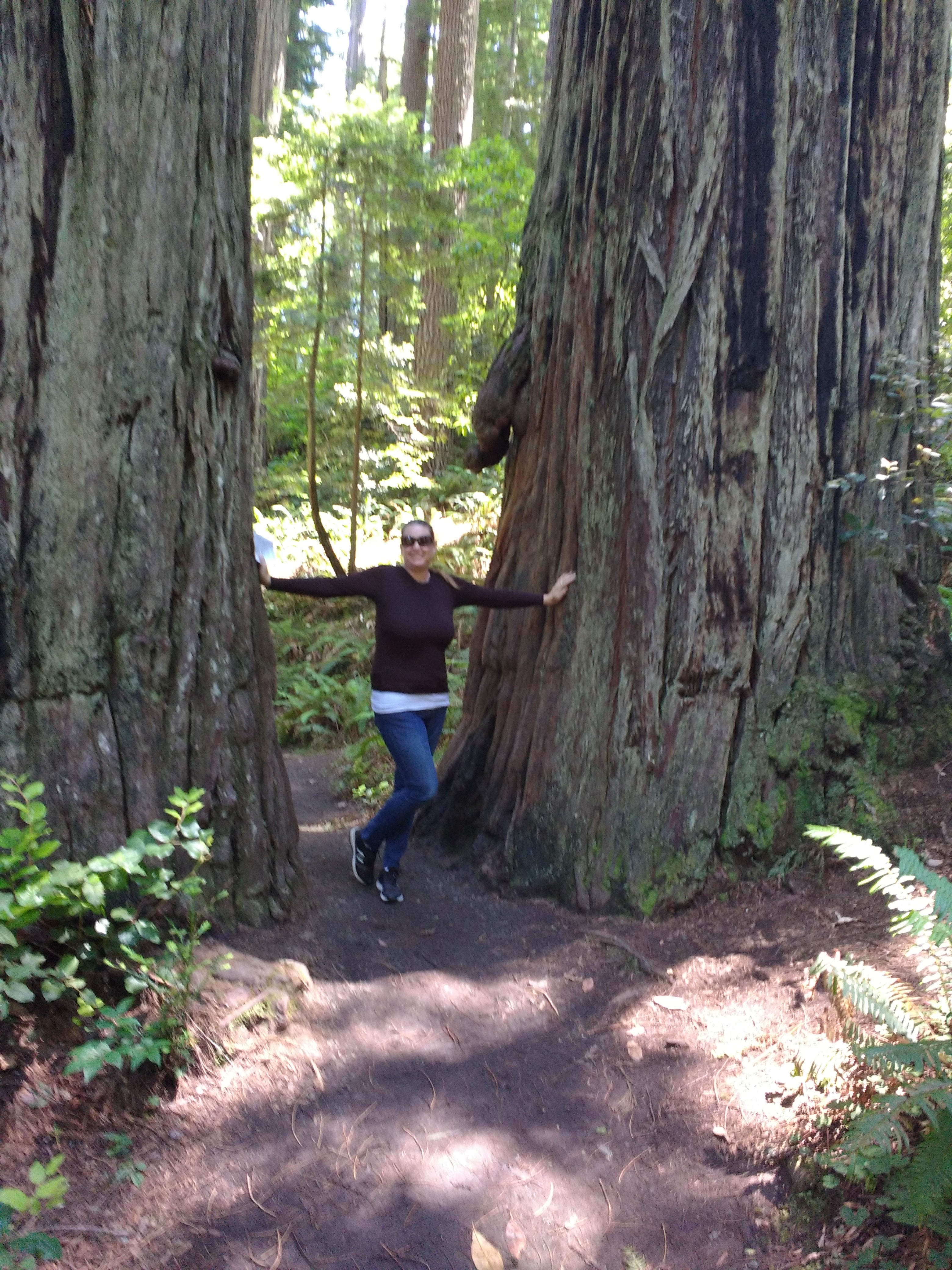 tiny travel chick places to hike in california redwood national park