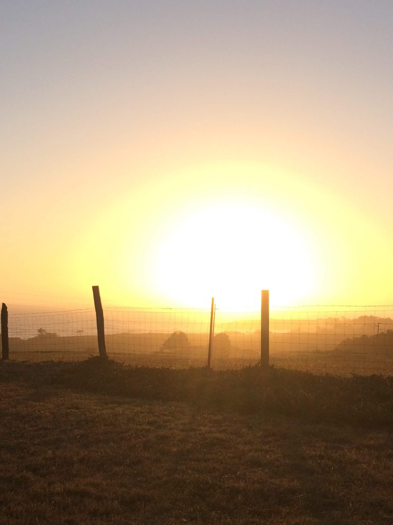 tiny travel chick things to do in california bodega bay sunset