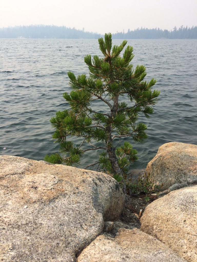 tiny travel chick things to do in california silver lake pine tree
