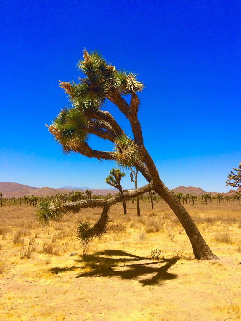 tiny travel chick unique things to do in southern california joshua tree
