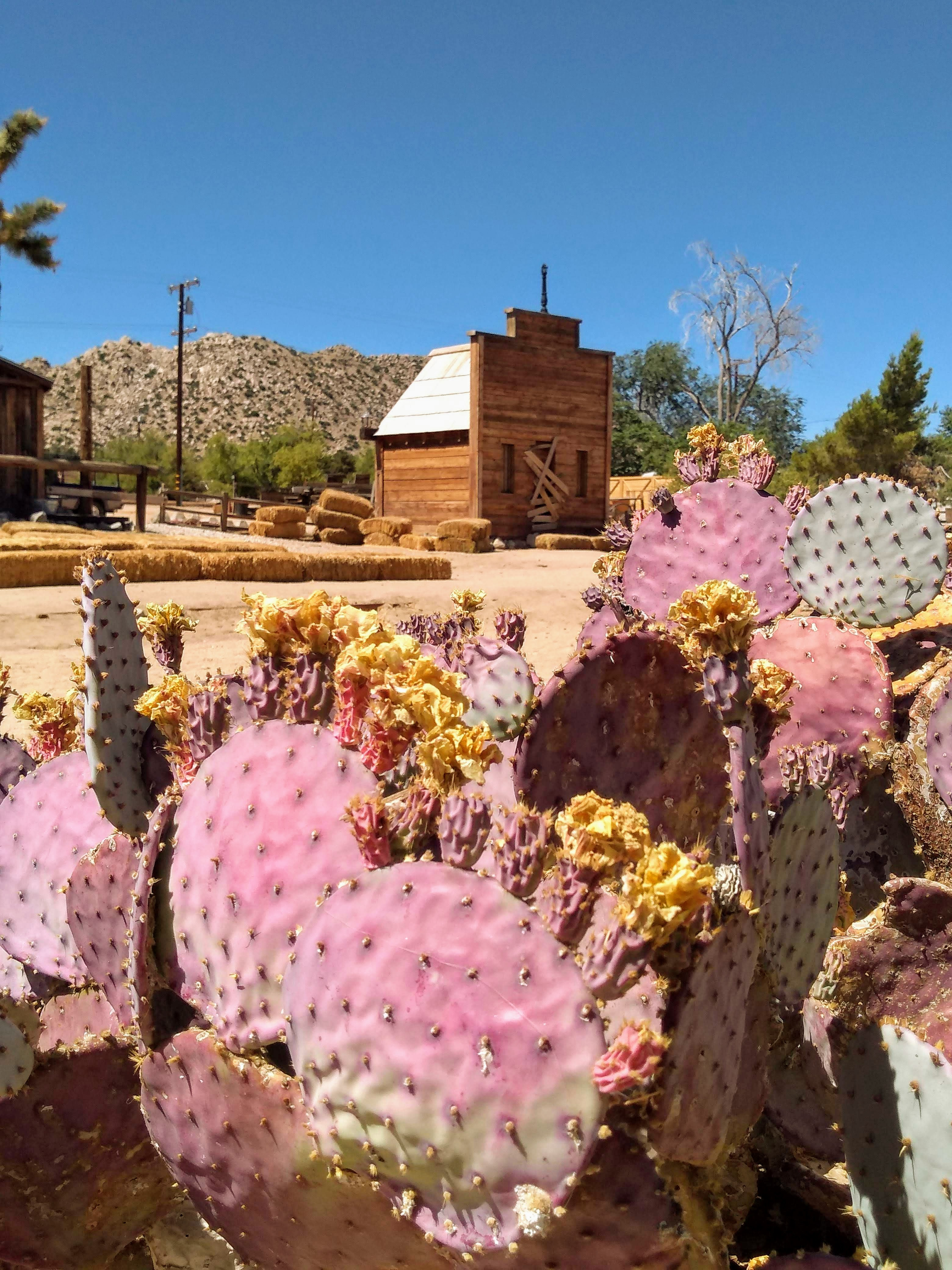 tiny travel chick unique things to do in southern california pioneer town cactus