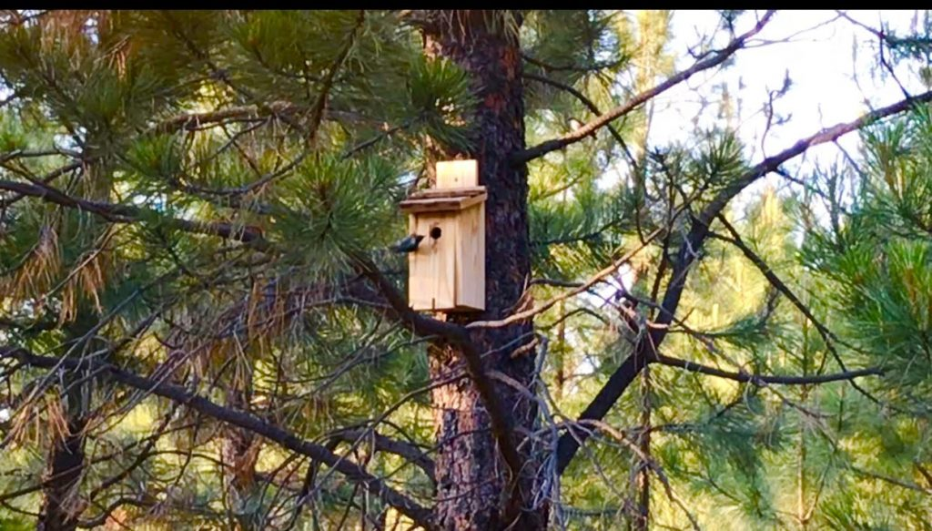 tiny travel chick tiny house airbnb forested tiny birdhouse